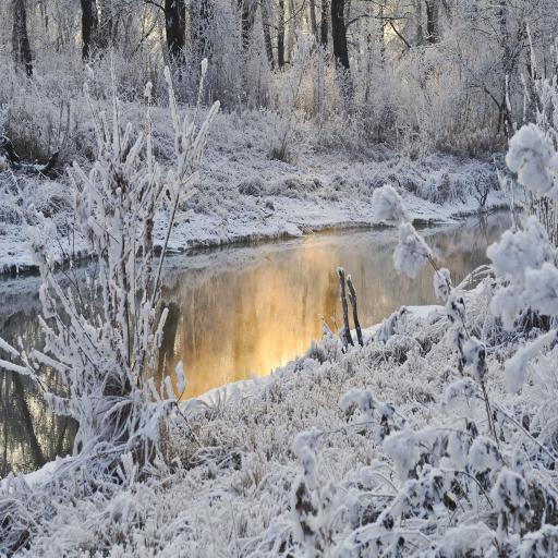冬日 美丽雪景
