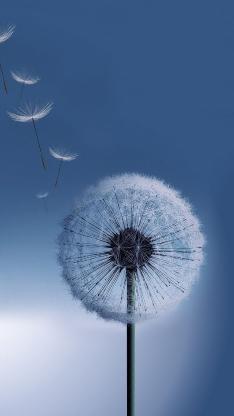蒲公英 蓝天 植物 天空