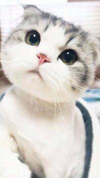 动物 小奶猫 白