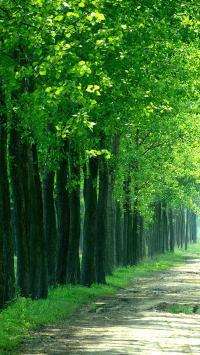 翠绿的树林 小路 绿