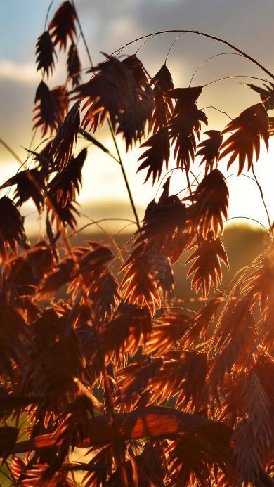 野草 秋天 夕阳 日落 阳光 黄色