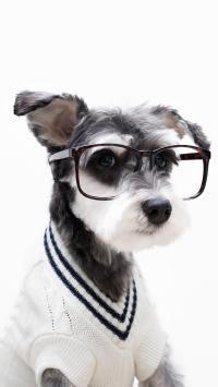 动物 雪纳瑞 绅士眼镜