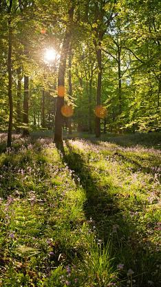 森林 阳光 花朵 草地 早晨