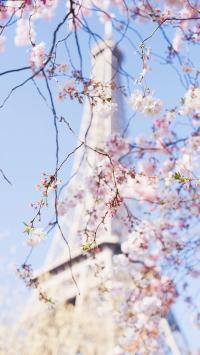 樱花与巴黎铁塔