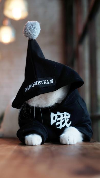 猫 喵星人 哦 帽子 萌宠 动物
