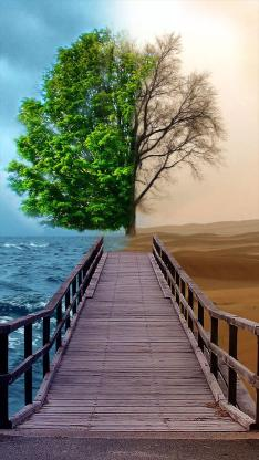树 海 沙漠 自然 景观