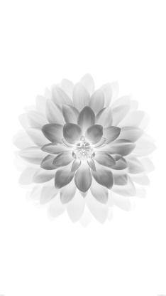 花朵 黑白 水墨