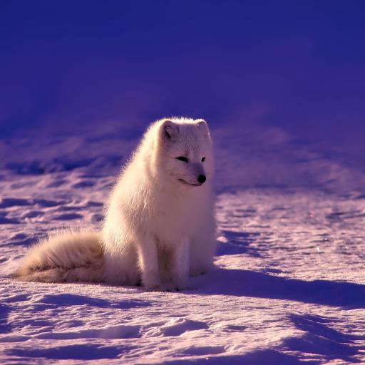 雪地上的白狐狸