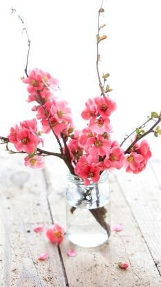 花 唯美 浪漫 花季 彩色