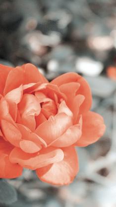 花 花朵 植物