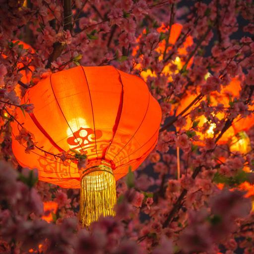 灯笼 红色 春节 节日 喜庆