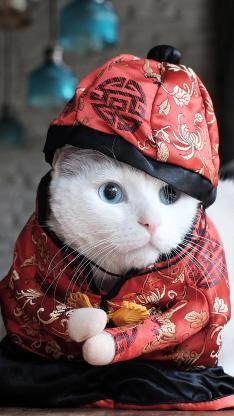 猫 唐装 喵星人 春节 红色