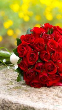 花朵 浪漫 爱情 花卉 红色 植物