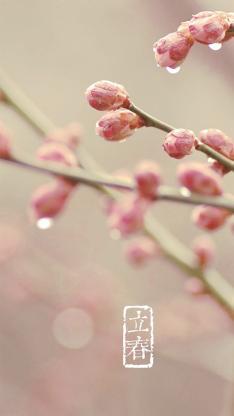 节日 春天 立春 花朵 水滴