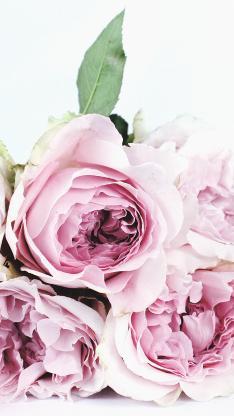 花束 植物 玫瑰花 花瓣 唯美 浪漫
