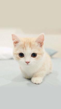 猫咪 小猫 萌宠 小动物