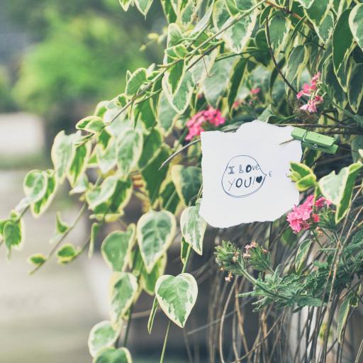 i love you 纸条 便签 叶子 植物 绿色