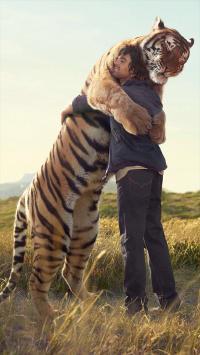 动物 老虎 拥抱 草原
