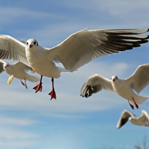 蓝天下飞翔的小鸟