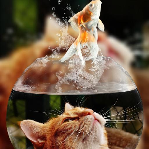 猫咪与鱼缸里的金鱼