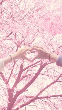 粉色 樱花 爱心 爱情