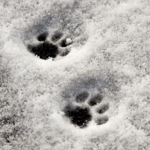 雪地上的熊脚印
