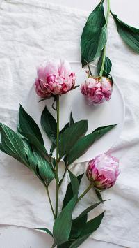 鲜花 玫瑰 唯美