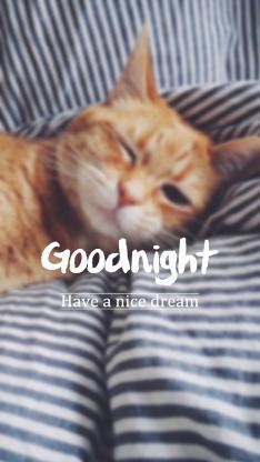 猫 goodnight 晚安 英文 条纹