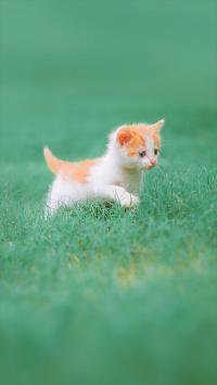萌 可爱 猫 宠物 喵星人 动物 彩色