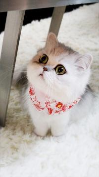 可爱 萌 猫咪 动物 彩色