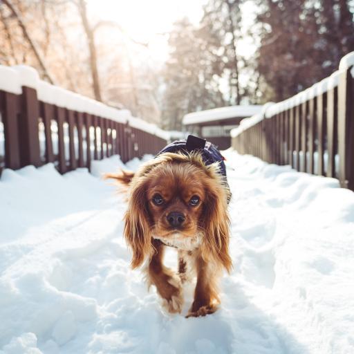 雪地 动物 狗 栅栏 长毛