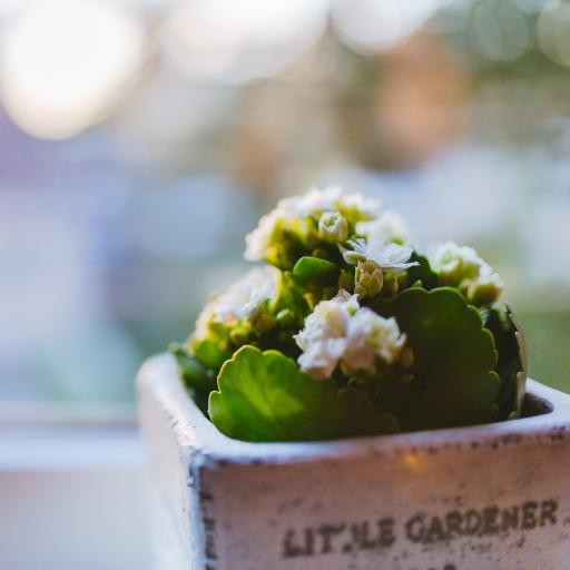 可爱小盆栽 白色小花 绿植