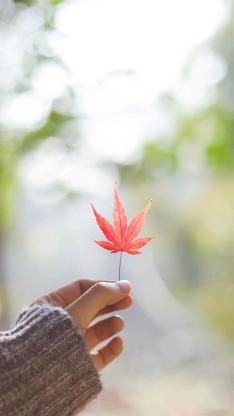 手中的红色枫叶 唯美意境