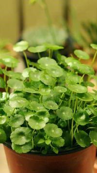 绿色清新护眼植物花卉盆栽