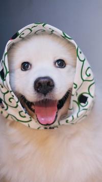 搞怪调皮的白色狗狗