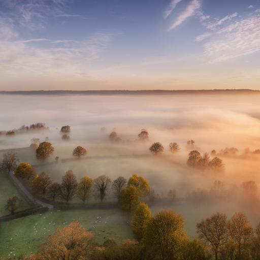 树 雾 天空 草原 风景 彩色