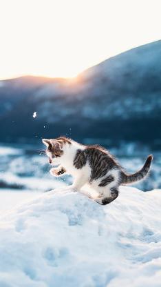 雪地里玩耍的可爱小奶猫