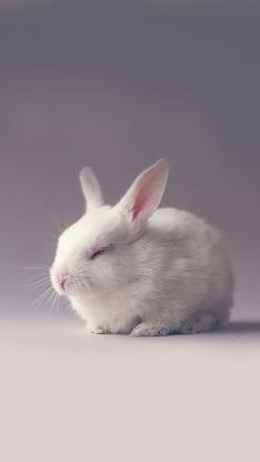 兔子 兔耳朵 可爱