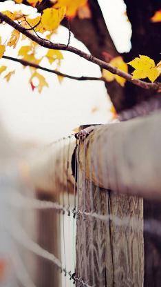 树叶 植物 拦网 黄色