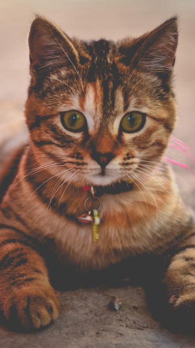 大黄猫 可爱 老实
