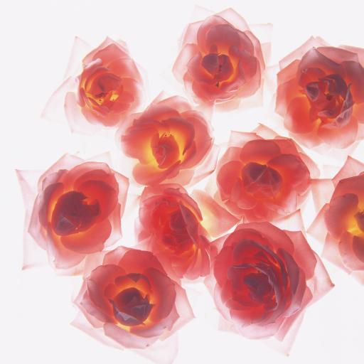 花 红色 玫瑰水墨 火红 手绘