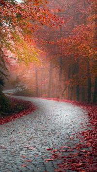 秋天马路 枫叶 风景 小路