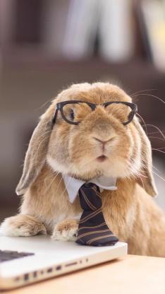 兔子 可爱 毛茸茸 萌宠 镜框