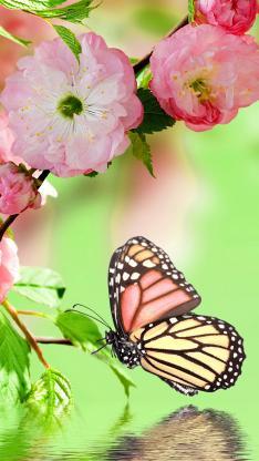 蝴蝶 色彩 鲜艳 翅膀 飞翔 湖面