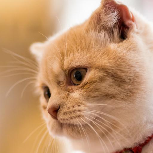 猫咪 萌宠 喵星人 可爱