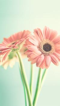 花朵 唯美 花 植物  彩色
