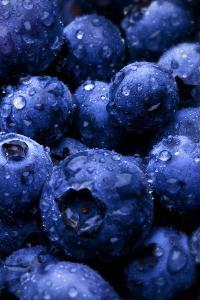 蓝莓 水果 水珠 营养