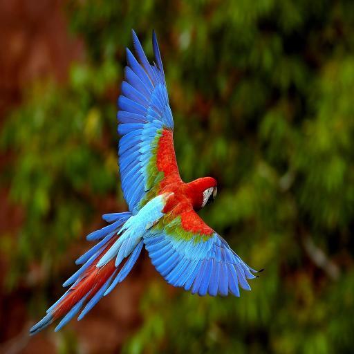 鹦鹉 动物 彩色