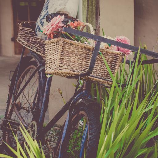自行车 车篮鲜花 绿草