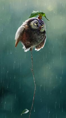 猫头鹰 动物 下雨 可爱